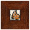 Butterfly in Legacy Frame