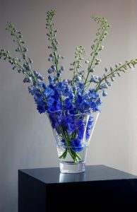 Pure Anemone Vase