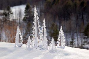 Vermont Evergreen Trees