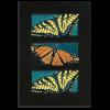 4x8 Butterflies Framed Tile Set in Ebony