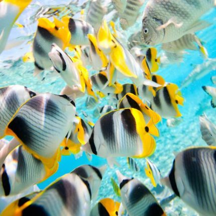 Butterfly Fish Wooden Jigsaw Puzzle