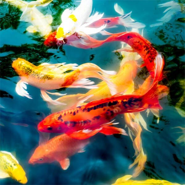 Koi Wooden Jigsaw Puzzle