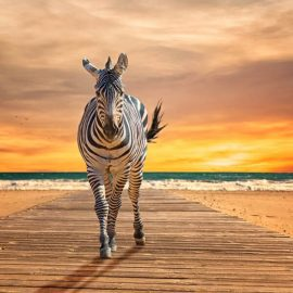 Zebra on a Beach Wooden Jigsaw Puzzle