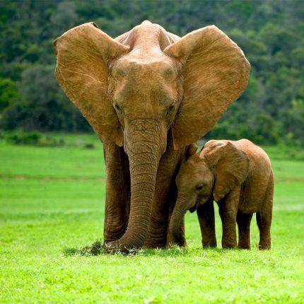 Elephants Zen Puzzle