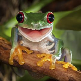 Happy Tree Frog Zen Puzzle