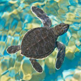 Mosaic Sea Turtle Zen Puzzle
