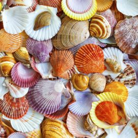 Seashells Wooden Jigsaw Puzzle
