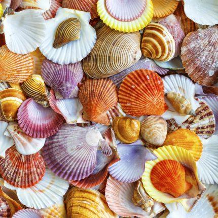 Seashells Wooden Jigsaw Puzzle